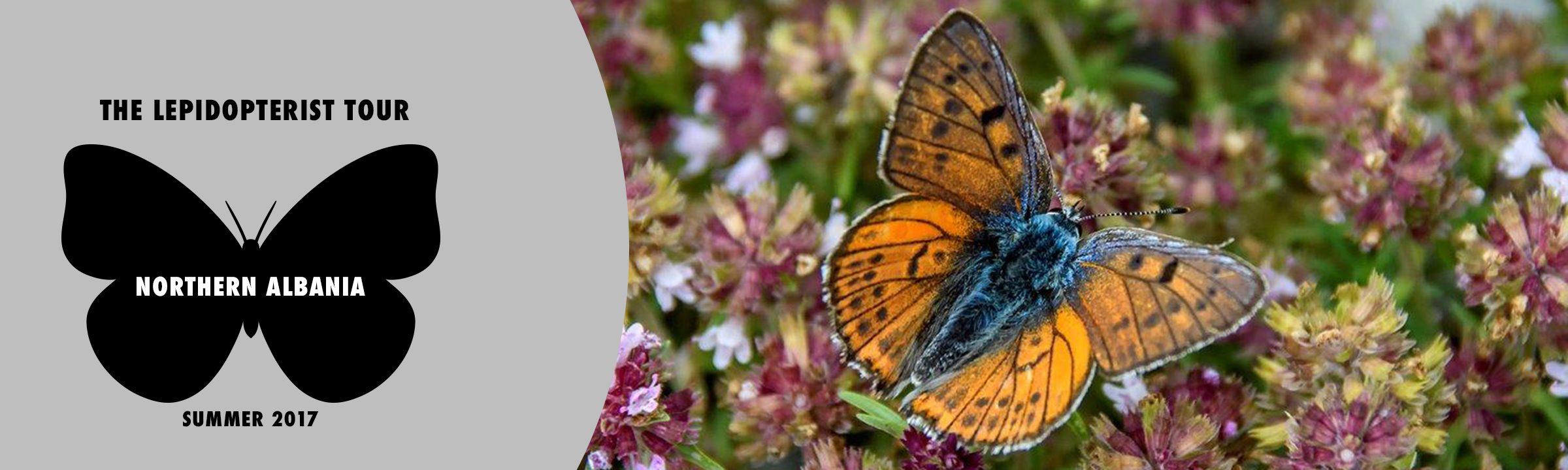 lepidopteristokok3